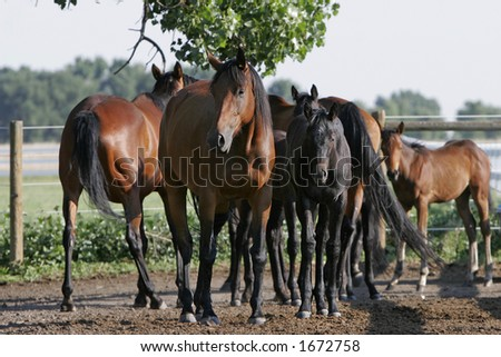 Herd of mares and their babies gathered in early morning light (shallow focus).