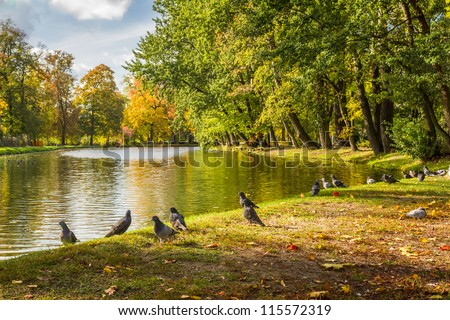 Herd of pigeons on autumn river in the park - stock photo