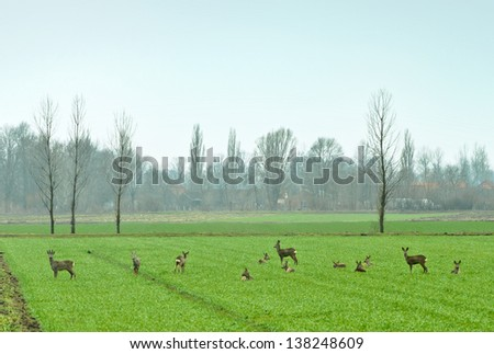 herd of roe deer resting in a field - stock photo