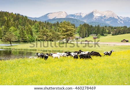 Herd of sheep at an idyllic meadow in the alps of Bavaria - stock photo