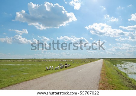 Herd of sheep eating grass at meadow side a road with beautiful sky