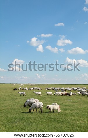 Herd of sheep eating grass at meadow with blue sky - stock photo