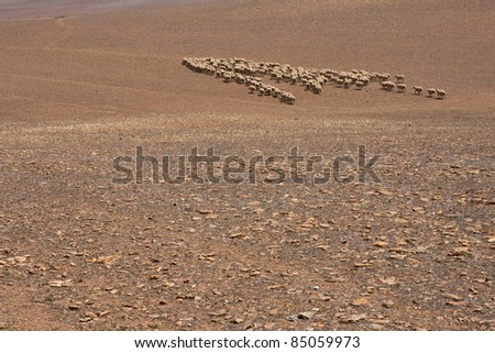 Herd of Sheep on a Hill