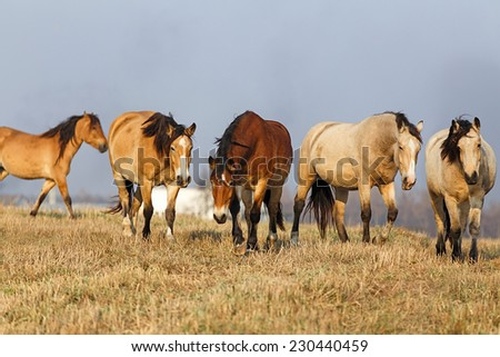 Herd of the horses - stock photo