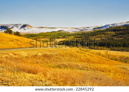 Herd of wild bizons are grazed on slopes of autumn gorge - stock photo
