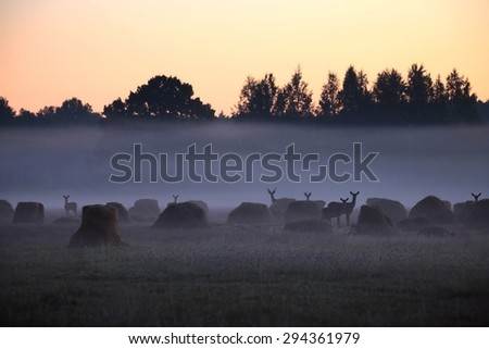 herd of wild deers in the summer field at dawn - stock photo