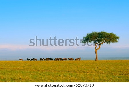 Herd of Wildebeest. Africa. Kenya. Masai Mara - stock photo