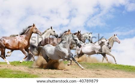 herd run on field - stock photo