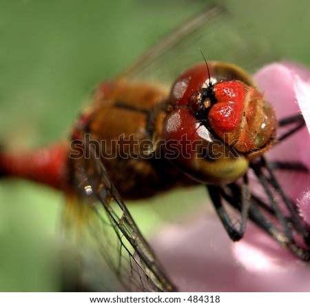 Here is a dragon fly on a flower.