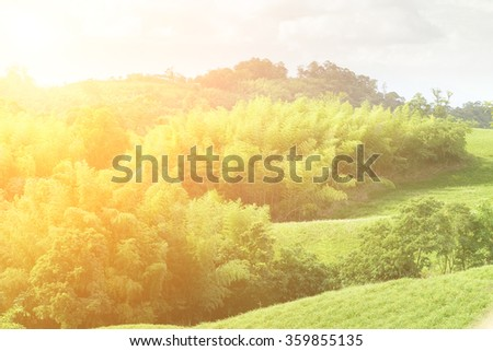 Here is a green grassland with bamboo. - stock photo