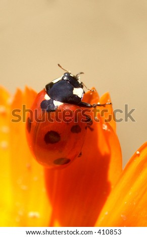 Here is a ladybird on a flower.