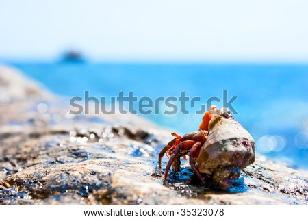 Hermit crab coming out from it's hell with ocean in the background - stock photo