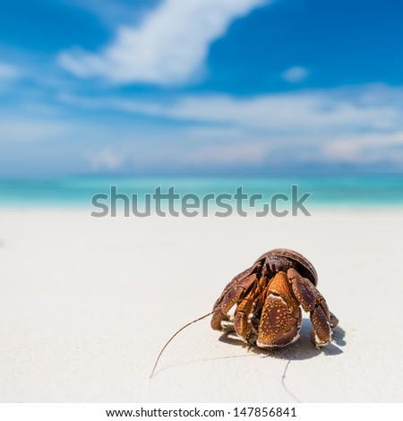hermit crab on beach with sky - stock photo