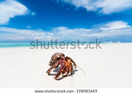 hermit crab on the beach - stock photo