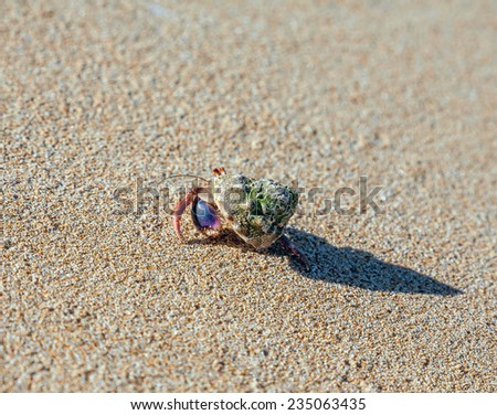 hermit crab on the beach on sand background.Close-up - stock photo