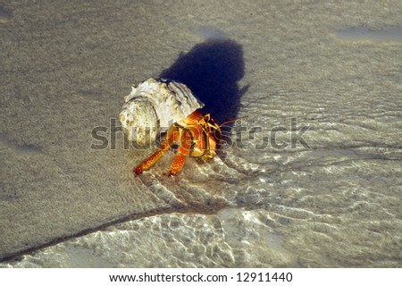 Hermit crab on the edge of crystal clear sea and fine sand - stock photo