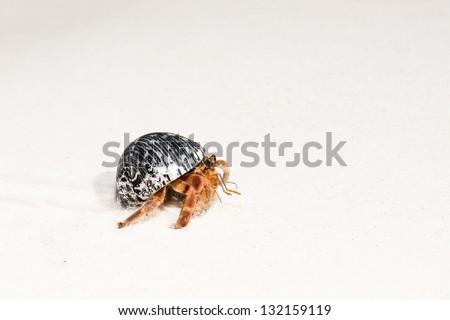 Hermit crab on white sandy beaches of Tachai Island, Similan, Andaman Sea, Thailand - stock photo