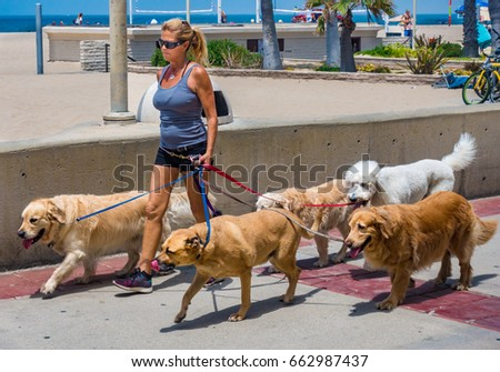 Hermosa Beach, California - June 18, 2017:  A woman walks 5 large dogs along the Hermosa Beach Boardwalk.