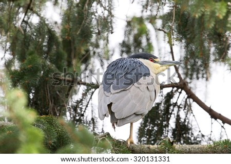 Heron balancing on a tree branch.