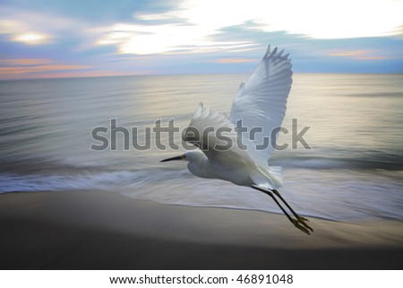 Heron flying near ocean - stock photo