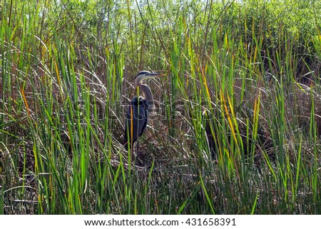 heron in Everglades National Park - stock photo