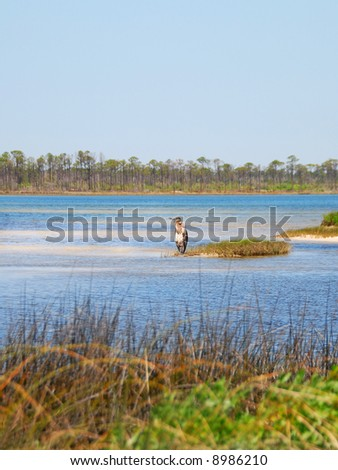 Heron on Island in Marshy Bay - stock photo