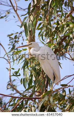 Heron on the tree - stock photo