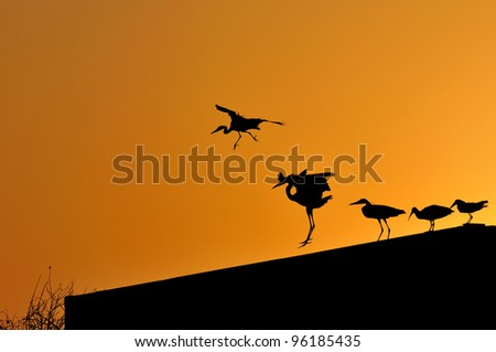 Herons and other birds silhouetted against an orange sky - stock photo