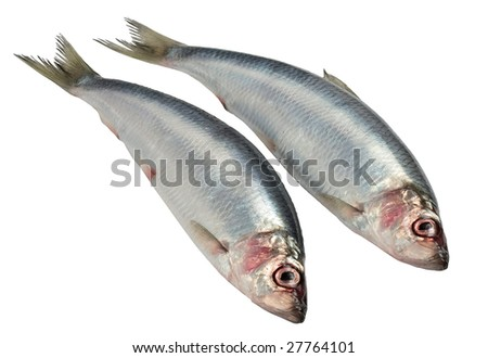 Herring - stock photo