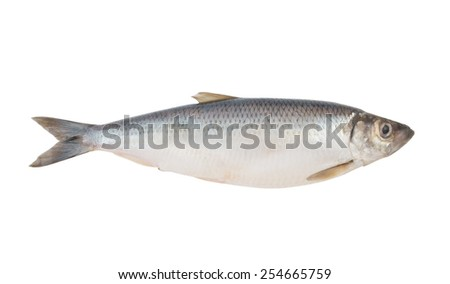 Herring fish isolated on white background - stock photo