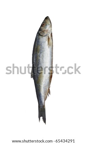Herring. Image series of different food on white background