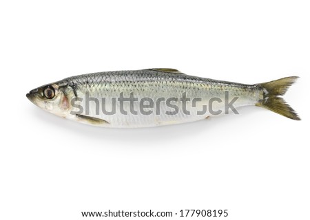 herring isolated on white background