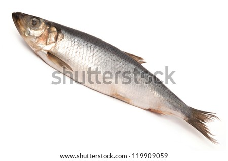 Herring on a white background - stock photo