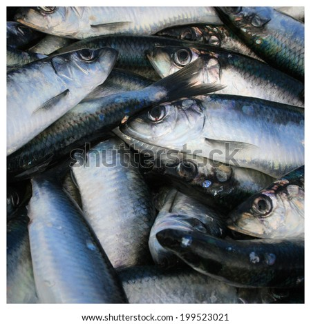 herrings - stock photo