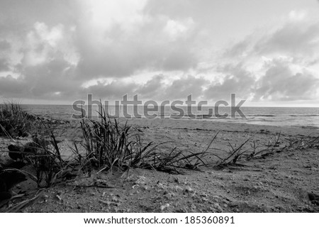 hervey bay whale watching beach background queensalnd australia in black and white - stock photo