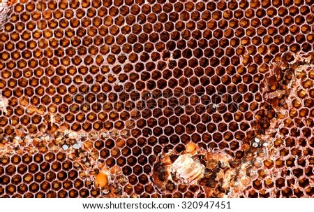 hexagonal cells of a hive after harvesting honey