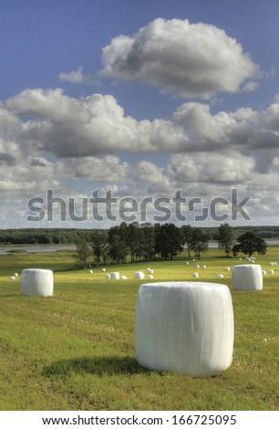 Hey bales on field - stock photo