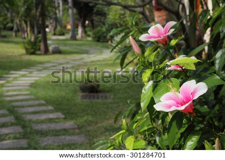 Hibiscus flower blossoming in a tropical park  - stock photo