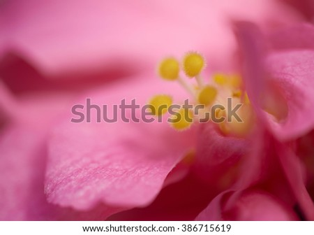 Hibiscus Flower Bokeh Background