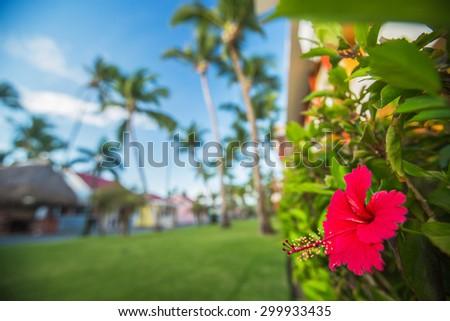Hibiscus Flower. Shallow DOF - stock photo