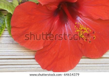 Hibiscus on tree bark - stock photo