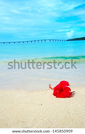 Hibiscus on Tropical Beach. This image was taken in Okinawa Prefecture, Japan
