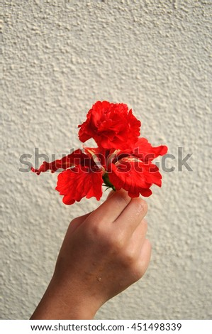 Hibiscus rosa-sinensis is a genus of flowering plants in the mallow family, Malvaceae. It was a Malaysian national flower.  - stock photo