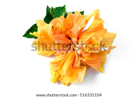 Hibiscus yellow flower tropical drawing flowers stock photo 100 hibiscus yellow flower tropical drawing flowers hawaii background mightylinksfo