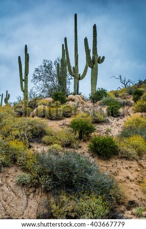 Hidden Treasures abound around Phoenix Arizona