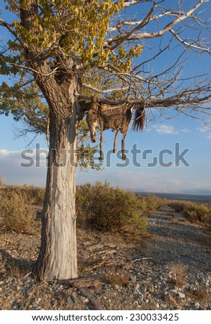 Hide sacrificial horse hanging on the tree - stock photo