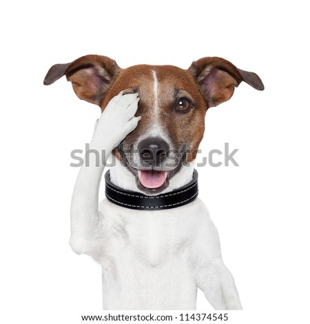 hiding covering one eye dog - stock photo
