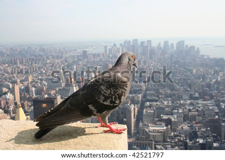 high above manhattan - stock photo