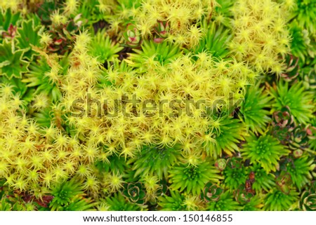 HIGH ALTITUDE ALGAE AND MOSSES, LLANGANATES NATIONAL PARK, ECUADOR  - stock photo