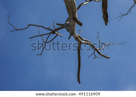 High altitude dead tree under blue sky